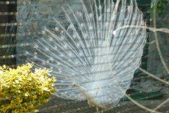 2011_GartenStille24