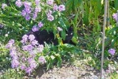 2011_GartenStille69