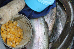 2015_Fishing-on-the-Farm16